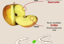 Photo of Apples Contain Pro-Neurogenic Compounds in Both Their Peel and Flesh: Study