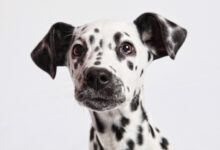 Photo of 25 Dog Breeds That Need a Lot of Exercise